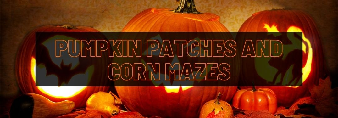 Where Are the Best Pumpkin Patches and Corn Mazes in the Bangor Area?