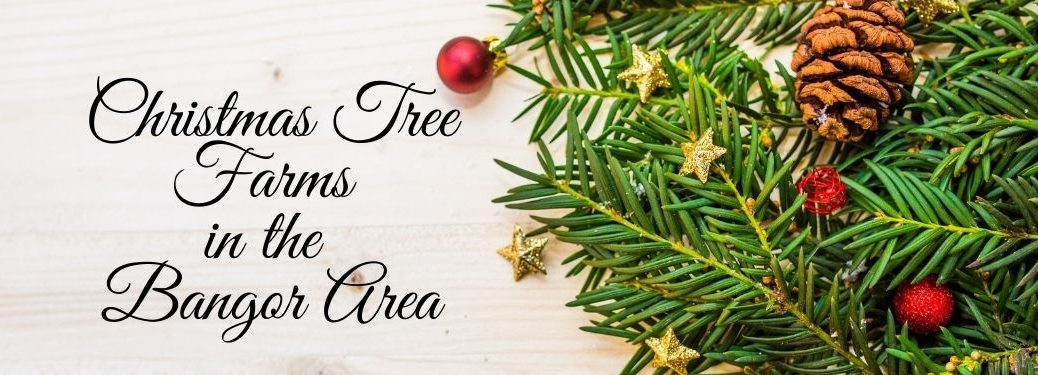 Christmas Tree Branches and Small Ornaments on White Background with Black Christmas Tree Farms in the Bangor Area Text