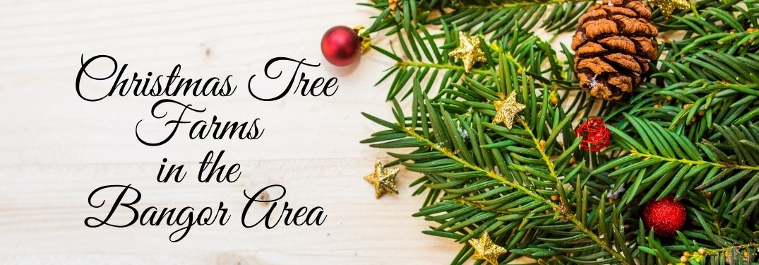 Best Places to Buy Christmas Trees and Wreaths in the Bangor Area