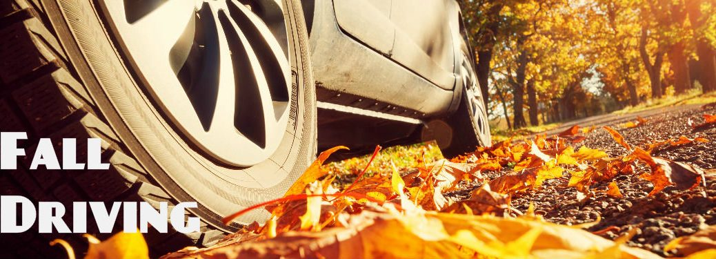 closeup of tire on road near fallen autumn leaves