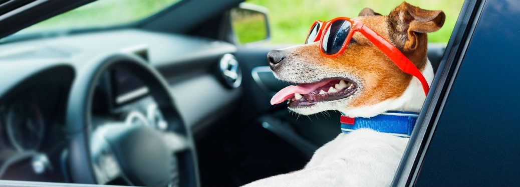 Dog with sunglasses sitting in drivers seat of car