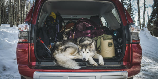 Photo of Dog Laying in Trunk of Red 4Runner