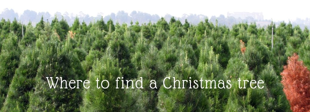 whree to find a christmas tree
