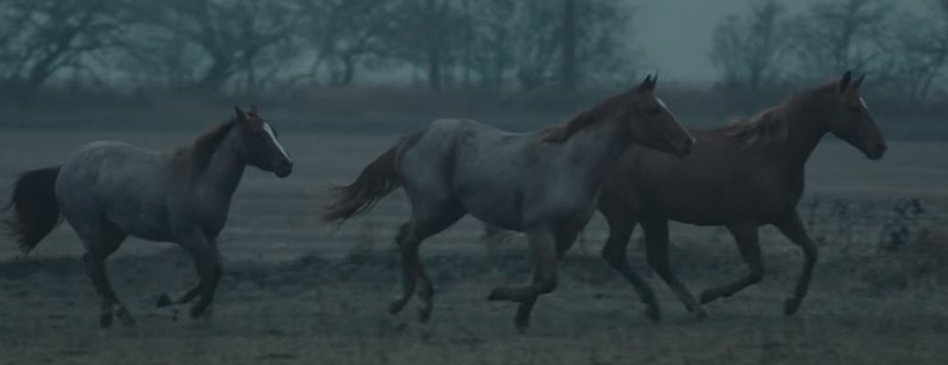 Three horses galloping in a field