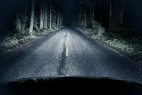 Car headlights illuminating a wooded road at night