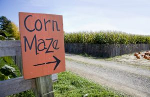 Corn field with a sign saying corn maze with an arrow