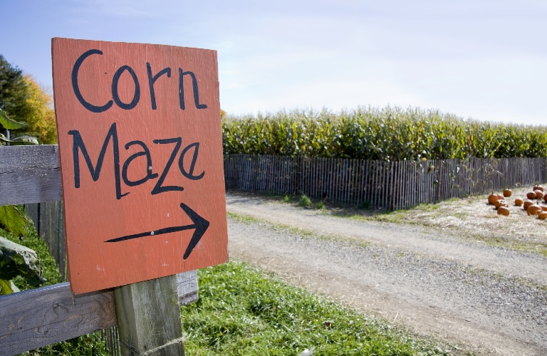 Corn Maze sign pointing towards the opening of a corn maze