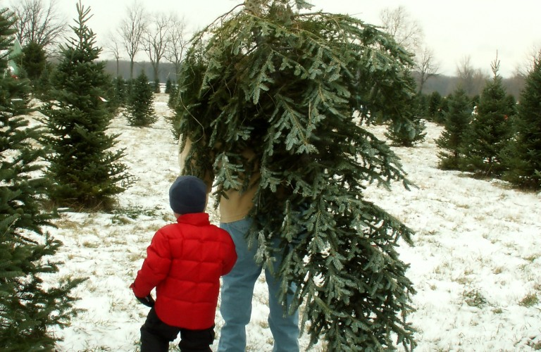 Bringing the Christmas tree home
