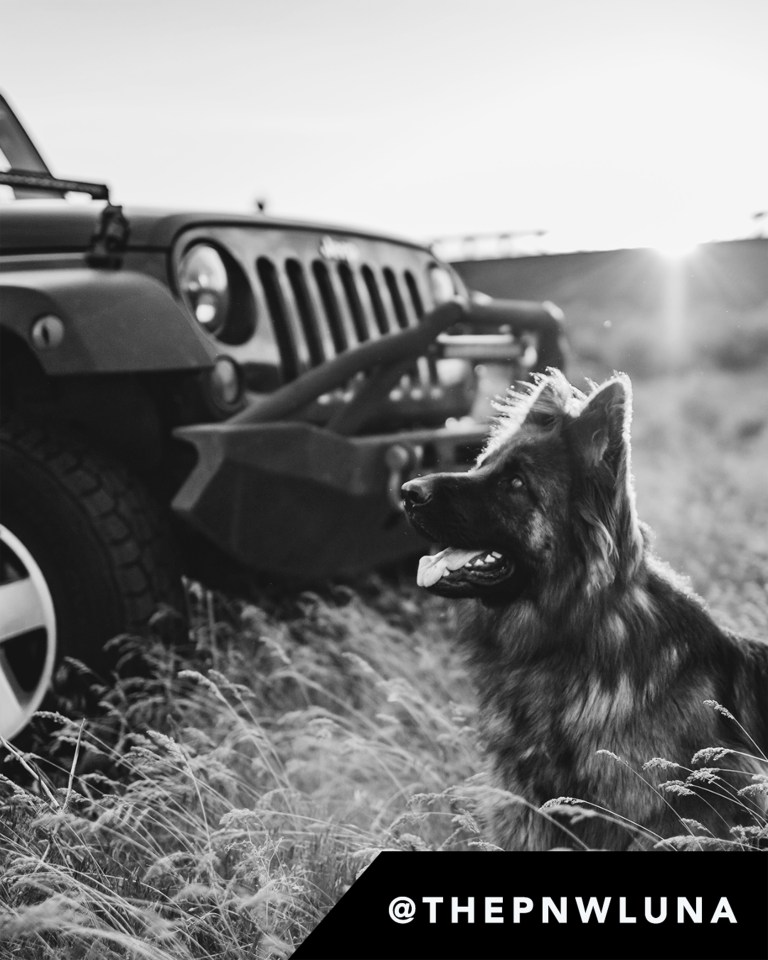 Dog in front of a Jeep Wrangler