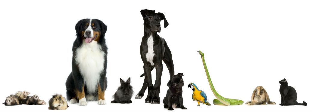 group of pets dogs cats snake bird on white background