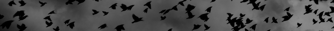 A group of black birds flying through a dark cloudy sky