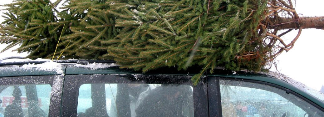 Christmas tree on top of a car roof