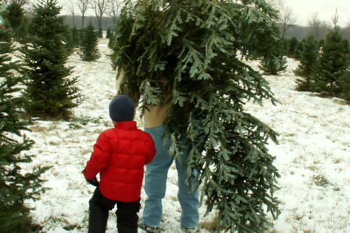 Father and son carrying a tree out of a tree lot