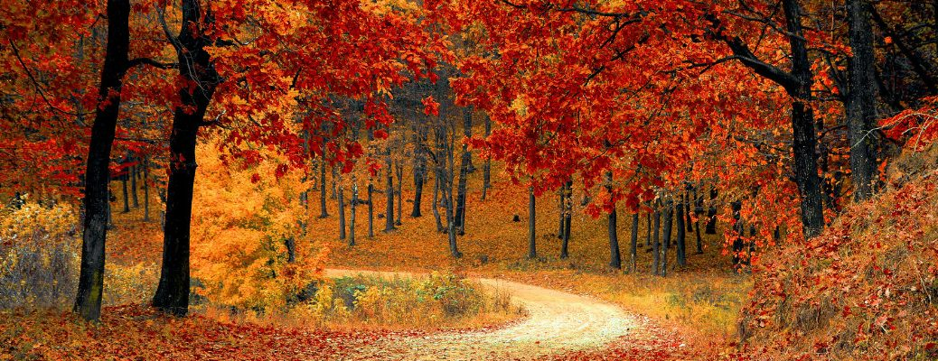 Rural road in full color during the fall season