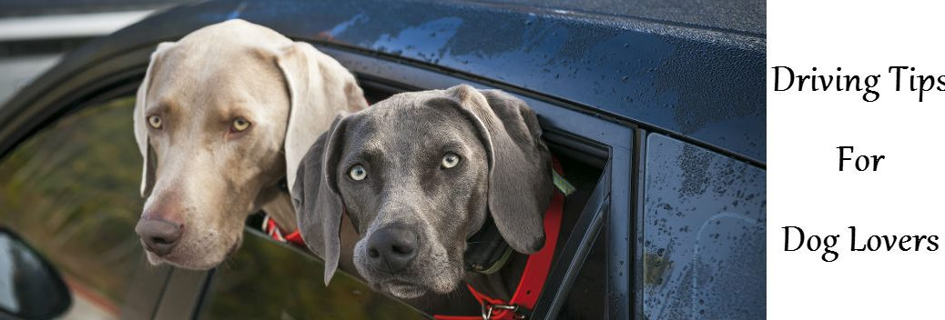 Driving tips for dog lovers Friendly Kia St. Petersburg FL: