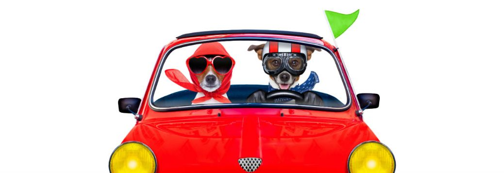 Dog driving a red car with a canine passenger