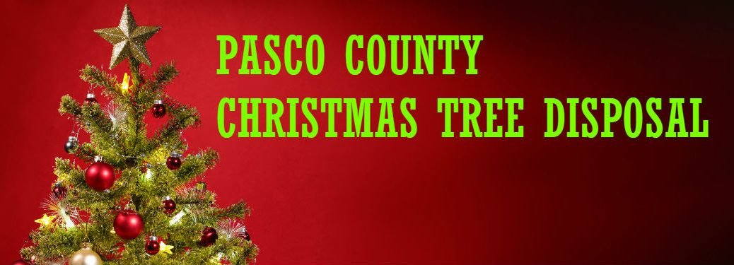 christmas tree against red background with pasco country christmas tree disposal text overlaid
