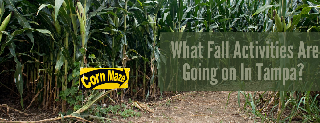 "Image of corn maze with green ""What Fall Activities are Going on in Tampa?"" text"