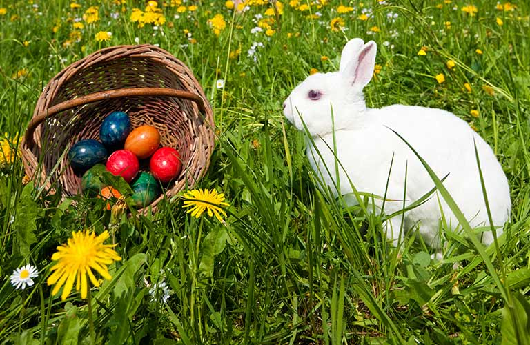 Easter bunny sitting next to a basket of Easter eggs