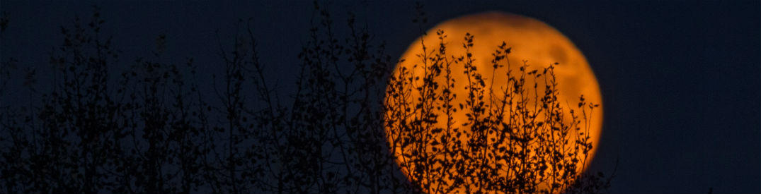 Blood orange moon with the silouettte of trees cast on it