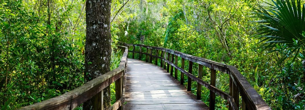 Boardwalk in Florida wetland