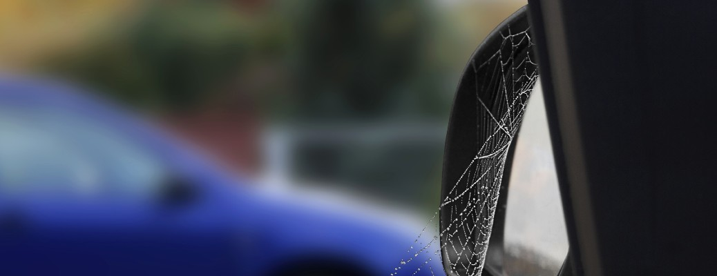 cobweb on side mirror after rain