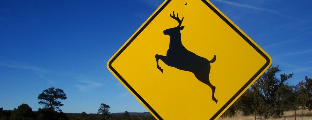 How To Avoid Hitting A Deer With Your Car In Vermont