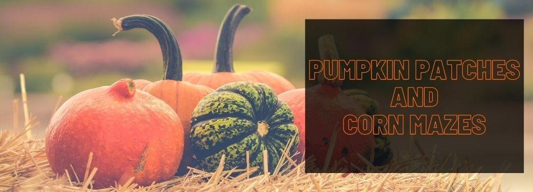 Pumpkins on a Hay Bale and Black Text Box with Orange Pumpkin Patches and Corn Mazes Text