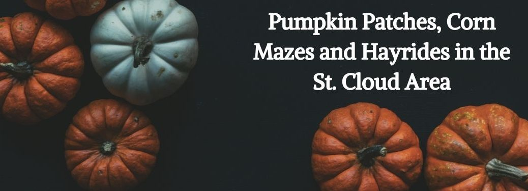 Orange and White Pumpkins on a Black Background with White Pumpkin Patches, Corn Mazes and Hayrides in the St. Cloud Area Text