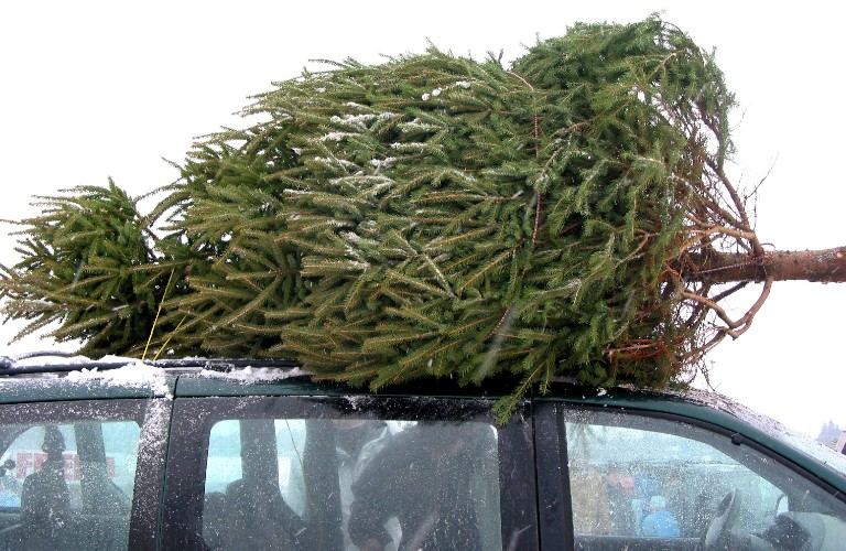 Christmas tree tied to roof of vehicle with some snow on it