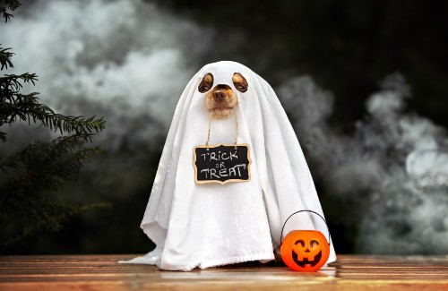 cute dog in a ghost costume holding a trick or treat sign