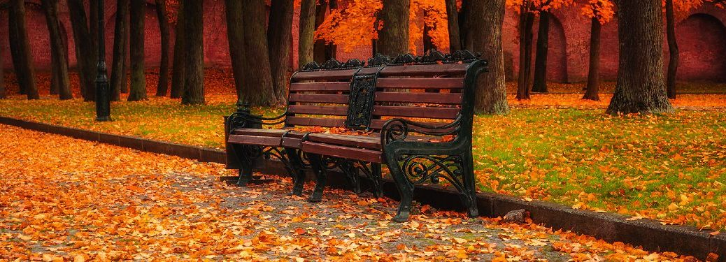 bench with autumn leaves all around it