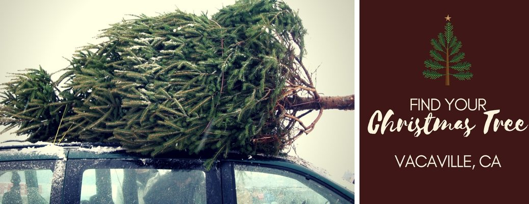 where to get Christmas trees near Vacaville CA