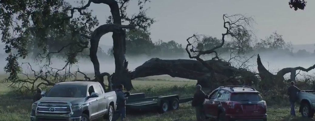 Toyota-trucks-and-RAV4-parked-in-front-of-giant-fallen-tree