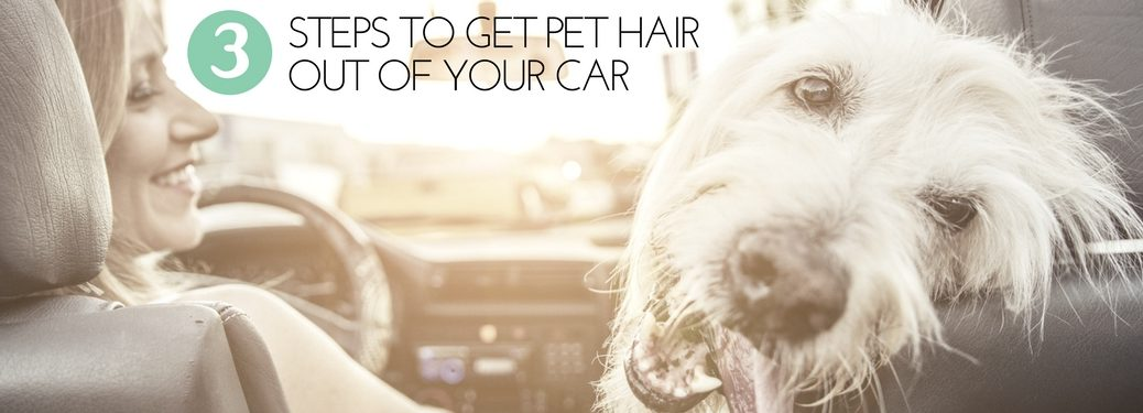 3-steps-to-get-pet-hair-out-of-your-car-with-background-image-of-woman-driving-car-with-shaggy-white-dog-riding-in-passenger-seat
