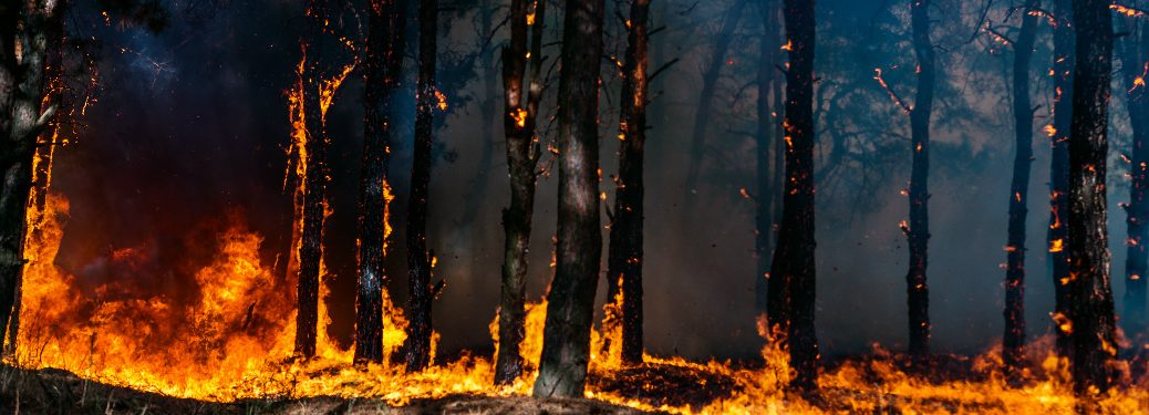 A wildfire ravaging a pine forest