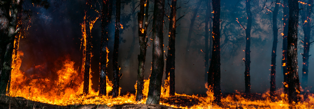 Toyota Makes Donations to Support California Wildfire Relief Efforts