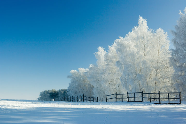 Snow-covered landscapre with trees and a fence
