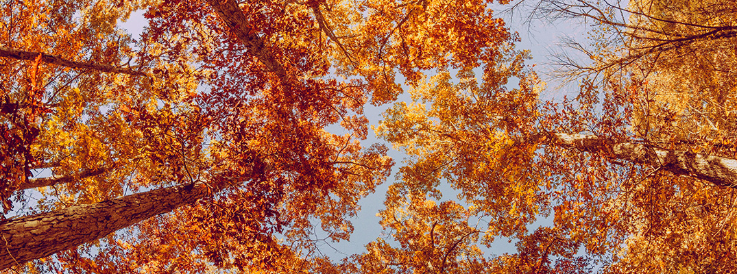 A view of colorful trees looking up from the ground