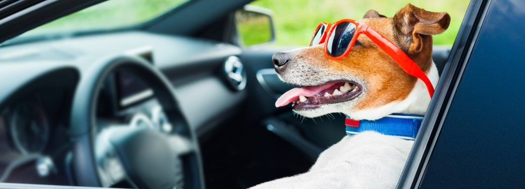 Dog with sunglasses sitting in the driver's seat of a car