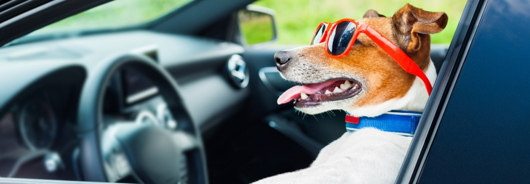 Tips for Keeping Your Car Clean with a Dog