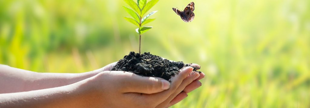 Person holding soil with a plant in it and a small butterfly flying by it