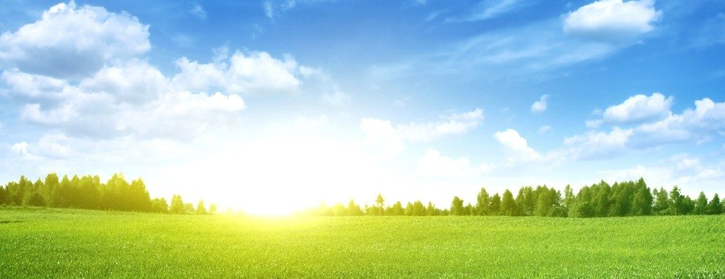 An image of a grassy field with the sun rising.