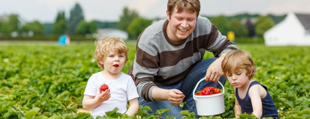 A stock photo of a father and two kids picking produce.