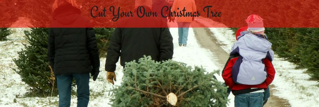 cut your own christmas tree family with christmas tree