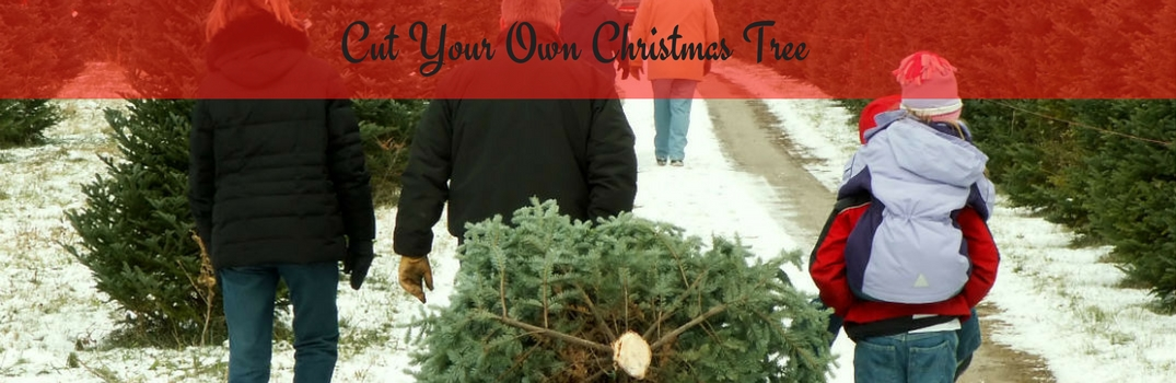 Cut Your Own Christmas Tree Near Me.Where To Cut Your Own Christmas Tree Around Burlington Vt