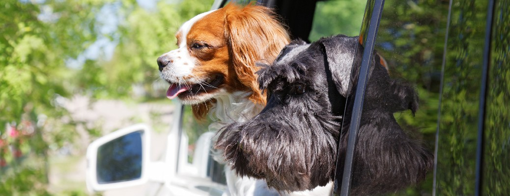 The side view of a small dog hanging its head out of a window of a vehicle.