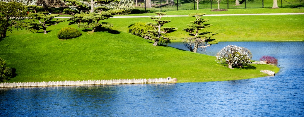 A local park filled with green grass, shrubs, and a pond.