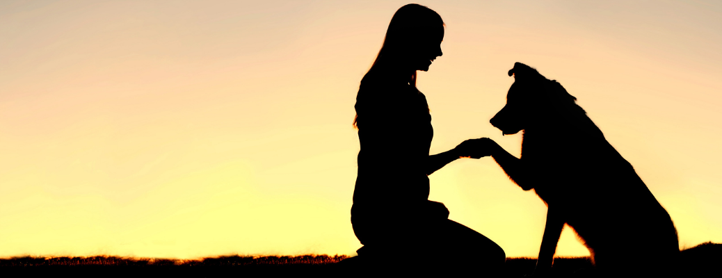 A woman playing with a dog
