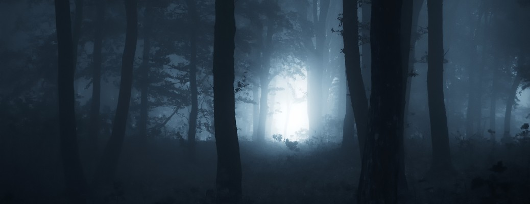 Moonlight shown through a dark forest at night.